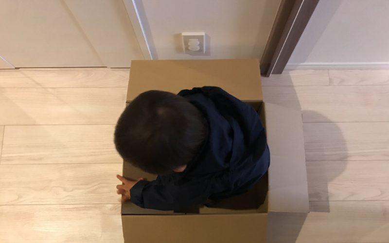 引っ越し荷造り用のダンボールに入る1歳児